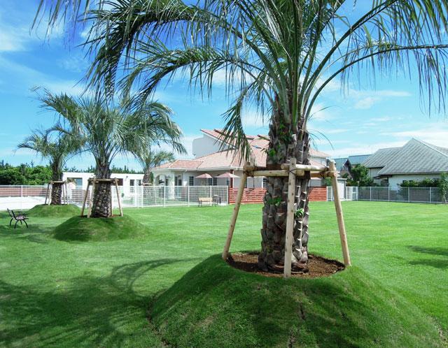 ヤシの木がレイアウトされ、リゾート地を彷彿とさせる広大な天然芝のドッグラン風景